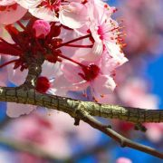 Onverwachte-kosten-tijdens-het-voorjaar